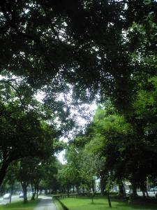 20100705_1.jpg